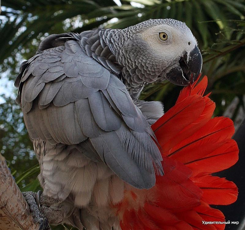 попугай гриша картинки пришли восторг