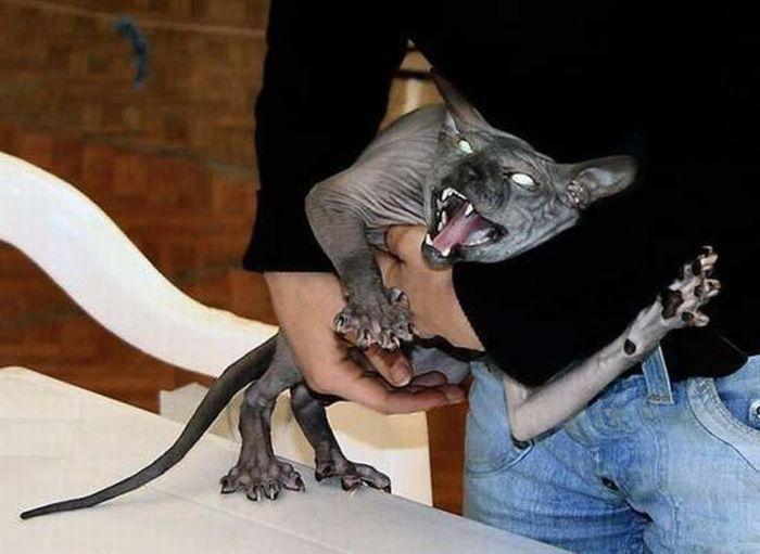 Злые котэ